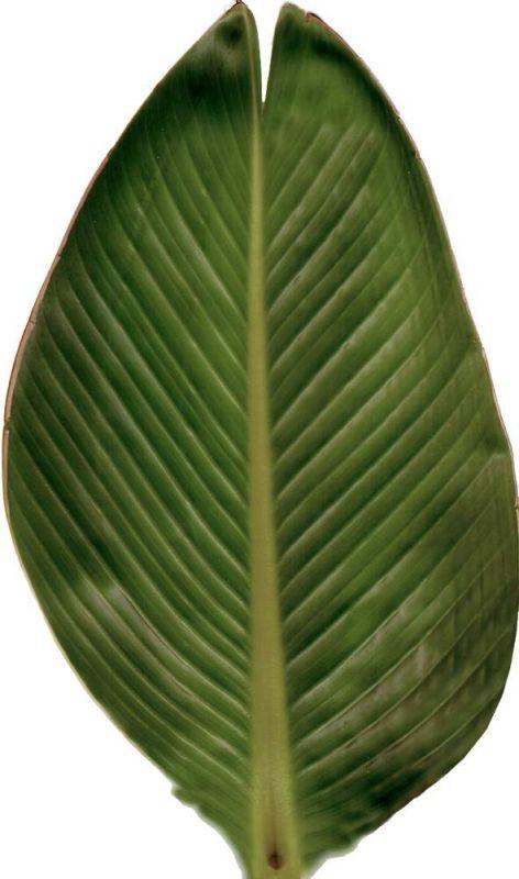 其他杂项-植物纹理 026