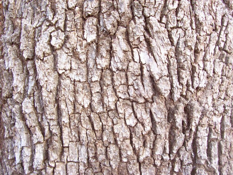 木纹木材-树皮 103