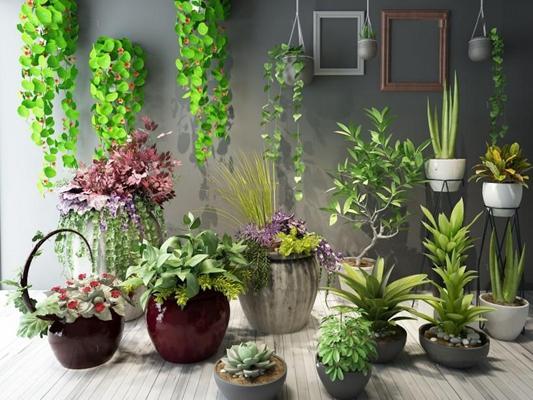 植物盆栽绿植花卉花草组合 植物 盆栽植物 绿植 花卉 花草