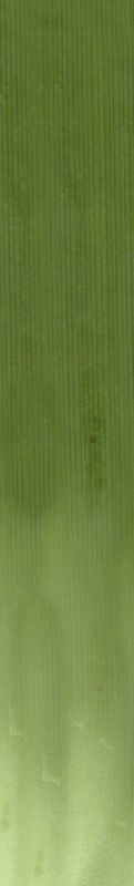 其他杂项-植物纹理 039