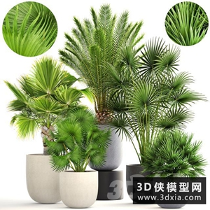 棕榈植物组合