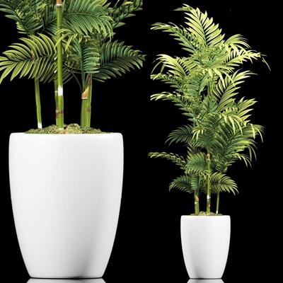 现代散尾葵植物3D模型