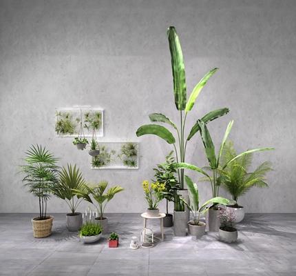 现代苏铁绿植盆栽组合3D模型