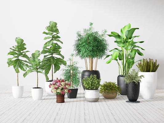 现代绿色盆摘组合3D模型