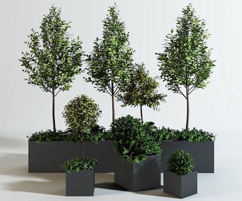 现代万年青绿植树3D模型