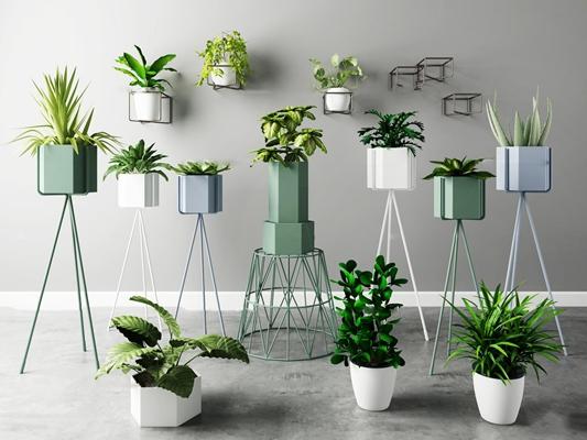 现代芦荟滴水观音盆栽花架组合3D模型