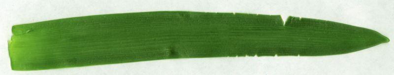 其他杂项-植物纹理 006