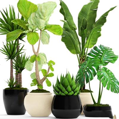 �F代植�物盆栽�M合3D模型