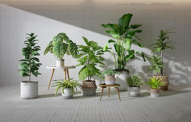 現代植物盆栽組合3d模型
