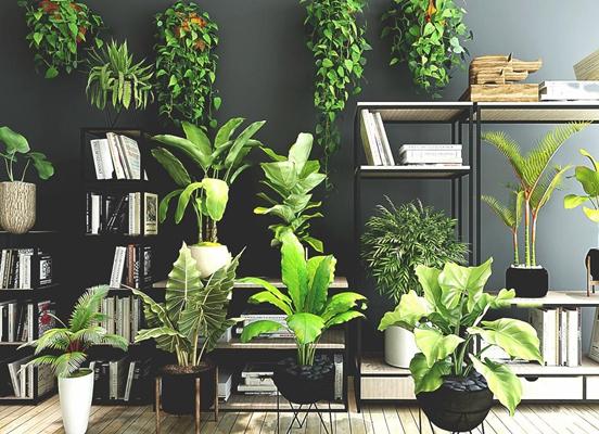 现代植物盆栽花架书架植物组合3D模型