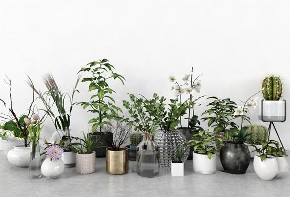 现代仙人掌绿植盆栽花瓶插花组合3D模型