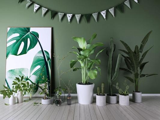 植物 北欧绿植 仙人掌 植物 挂画