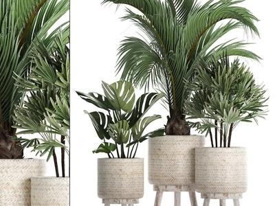 北欧绿植盆栽3d模型