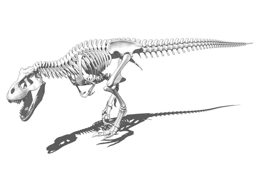 恐龙骨架SU模型
