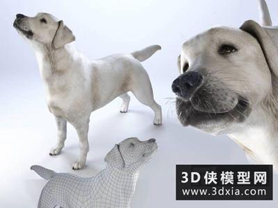 拉布拉多宠物狗模型