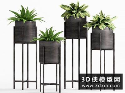 现代植物装饰品
