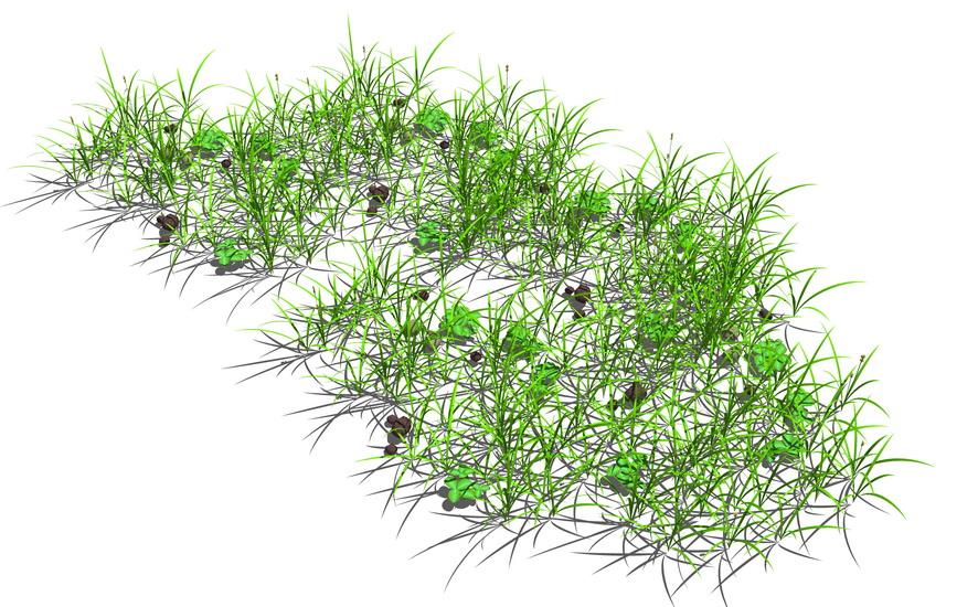地被植物SU模型