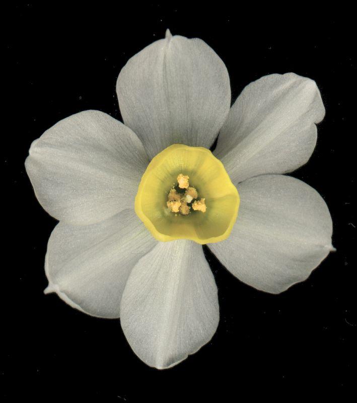 其他杂项-植物纹理 065