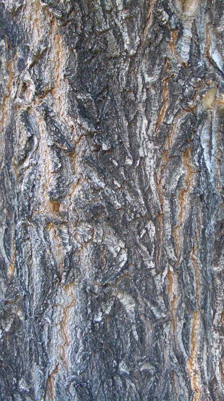木纹木材-树皮 118
