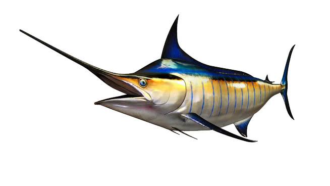 三维剥离Marlin Billfish 食蜂鸟 鱼 战机 飞机 动物