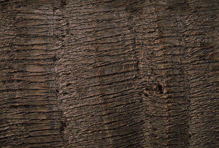 其他杂项-植物纹理 055