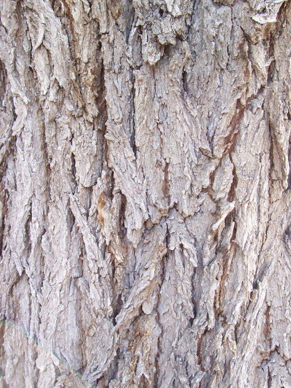 木纹木材-树皮 087