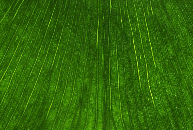 其他杂项-植物纹理 027