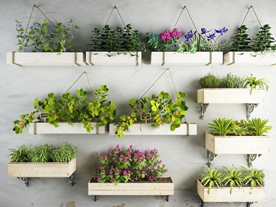 植物吊兰花艺盆景盆栽绿植挂饰 现代植物墙 吊兰 花艺 盆景 盆栽 绿植挂饰 植物