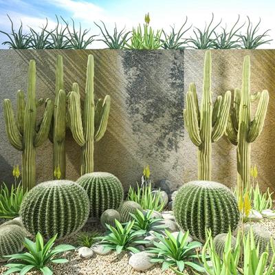 沙漠植物仙人掌组合 绿植 仙人掌 绿植 仙人掌