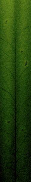 其他杂项-植物纹理 022