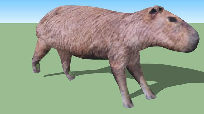 水龟 公羊 猪 马 公牛 野猪