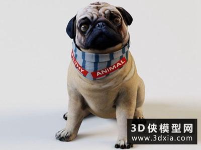 哈巴狗模型