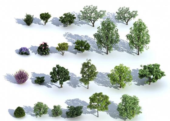 梧桐树3D模型