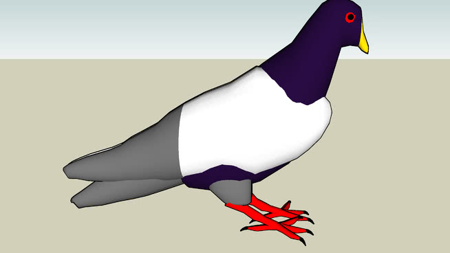 鸽子 国王企鹅 鸟 喜鹊 巨嘴鸟 蛎鹬