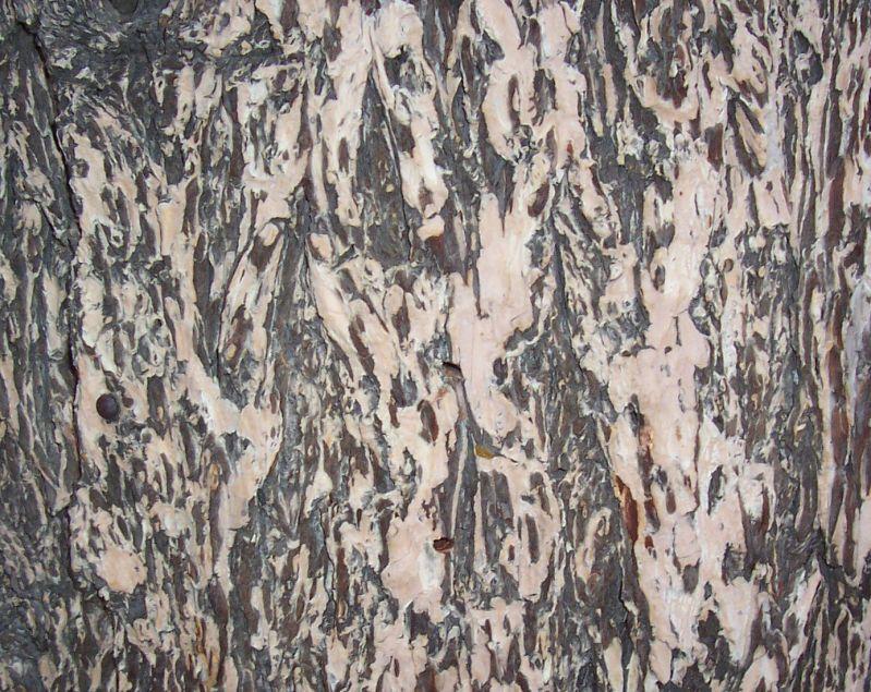 木纹木材-树皮 093