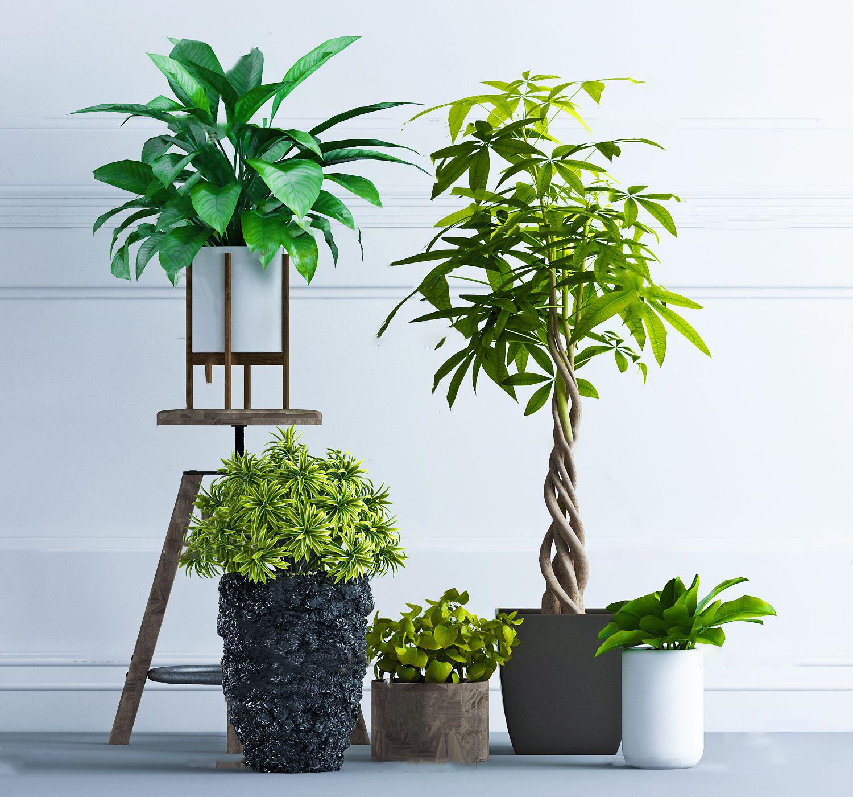 現代植物盆栽3D模型