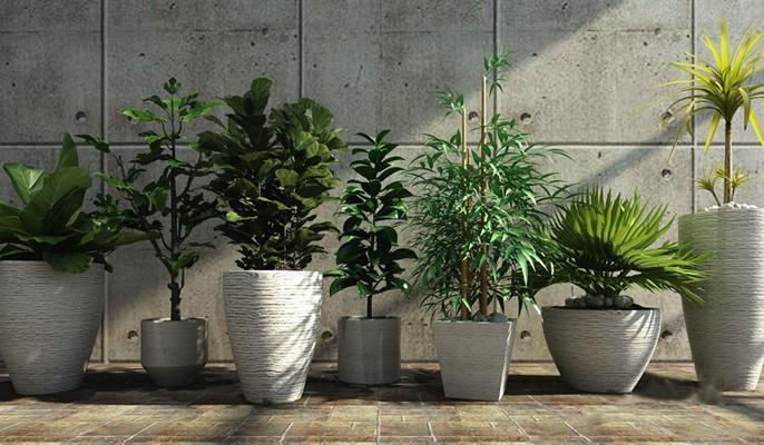 植物组合 绿植 植物 盆栽组合