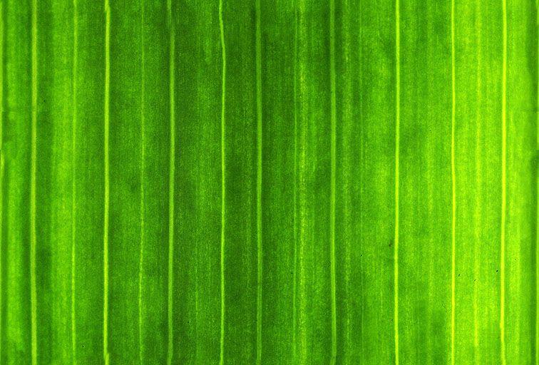 其他杂项-植物纹理 028