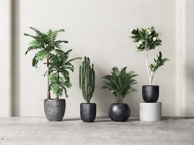 盆栽植物组合