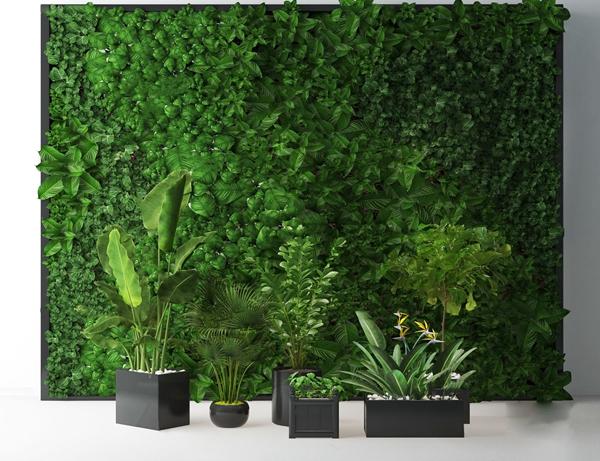 �F代植物芳心���G植盆栽3d模型