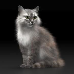 现代宠物猫3D模型