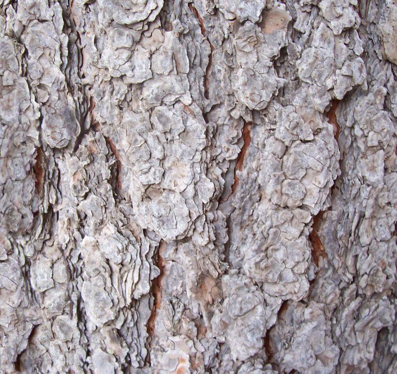 木纹木材-树皮 085