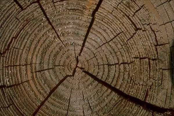 木纹木材-树皮 179