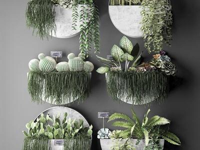 现代绿植装饰