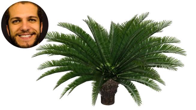 cycca亚信palmeira Sagu苏铁 植物 菠萝 画