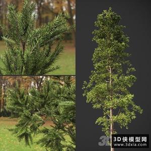 松树模型下载