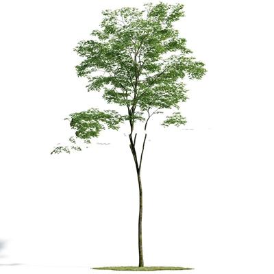 现代室外树3d模型