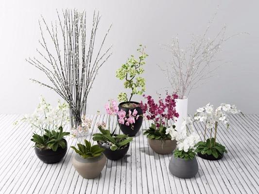 新中式蝴蝶兰干枝绿植组合 花艺 绿植 兰花 蝴蝶兰 干枝 整体花艺 花艺组合