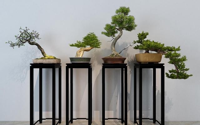 盆栽盆景 中式盆栽 绿植 边几 迎客松 中式盆栽 绿植 边几 迎客松