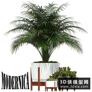 现代植物盆栽